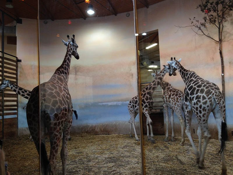 best things to do in prague Zoo